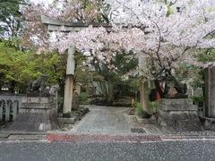 2013.04.06.yasuikonpira5.JPG