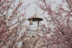2014.04.19.iwahara2.JPG