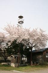 2014.04.19.iwahara3.JPG
